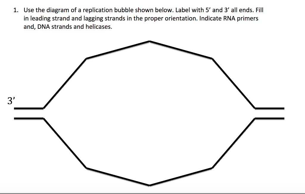 use the diagram of a replication bubble shown below  label with 5 and 3 all