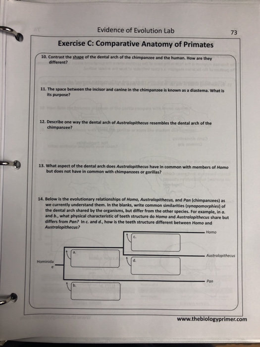 72 Evidence Of Evolution Exercise C: Comparative A