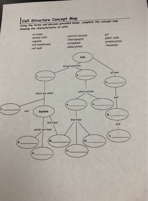 Cell Structure Concept Map Solved: Cell Structure Concept Map Using The Terms And Phr