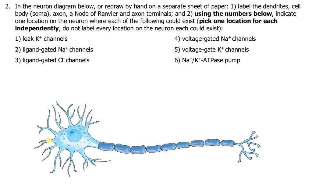 35 Label Parts Of A Neuron - Label Design Ideas 2020