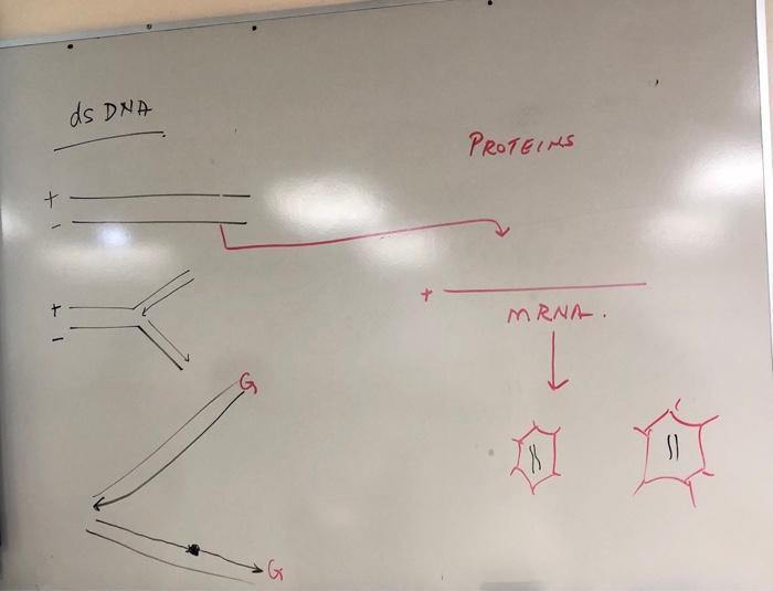 ds DNA ナ MRNA-