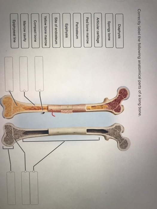Anatomy And Physiology Archive   June 23, 2018   Chegg.com