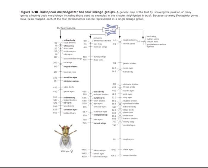 5. Refer To The Genetic Map In Figure 5.18 And Mar... | Chegg.com on