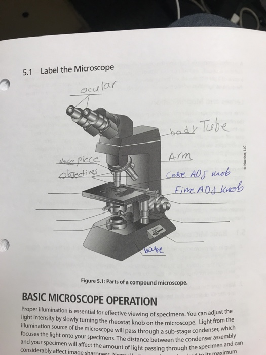 Solved 5 1 Label The Microscope Ocu Lar Bad Tuhe Arm Lake