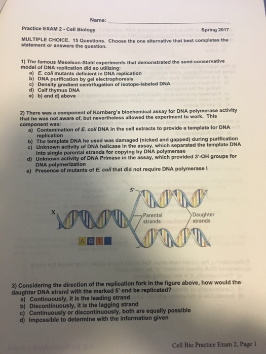 Solved: Name: Practice EXAM 2-cell Biology Spring 2017 MUL...   Chegg.com