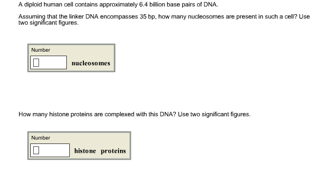 A Diploid Human Cell Contains Approximately 6 4 Billion Base Pairs Of Dna Encomp Es 35 Bp