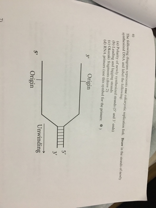 Solved The Following Diagram Represents One Eukaryotic Re