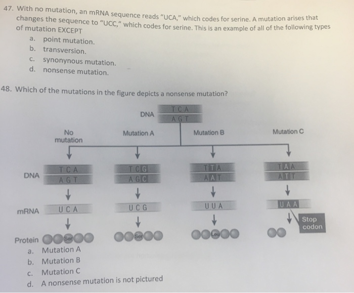 Solved 47 With No Mutation An Mrna Sequence Reads Uca