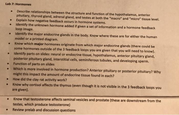 Solved Lab 7 Hormones Describe Relationships Between Th