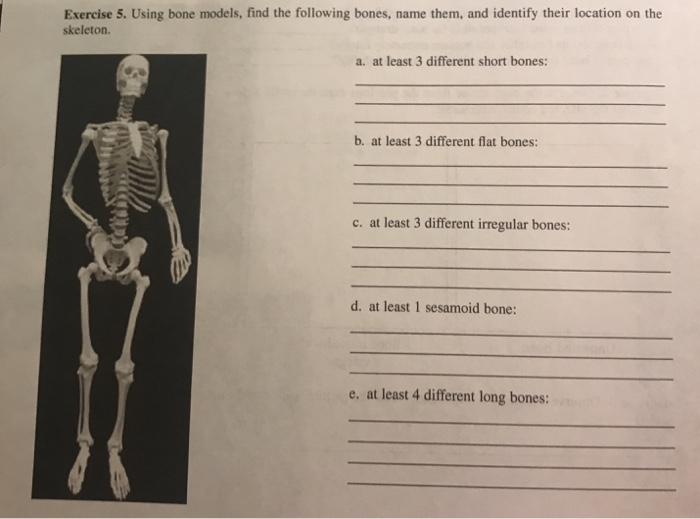 Solved Exercise 5 Using Bone Models Find The Following