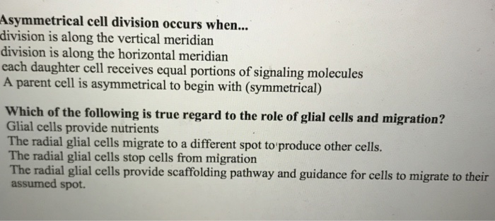 Asymmetrical cell division occurs when... division is along the vertical meridian division is along the horizontal meridian each daughter cell receives equal portions of signaling molecules A parent cell is asymmetrical to begin with (symmetrical) Which of the following is true regard to the role of glial cells and migration? Glial cells provide nutrients The radial glial cells migrate to a different spot to produce other cells. The radial glial cells stop cells from migration The radial glial cells provide scaffolding pathway and guidance for cells to migrate to their assumed spot.