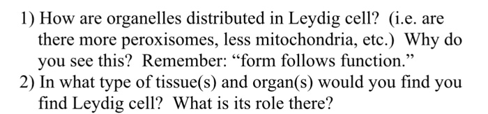 1) How are organelles distributed in Leydig cell? (i.e. are there more peroxisomes, less mitochondria, etc.) Why do you see t