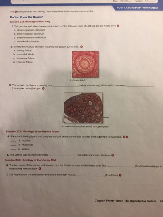 Solved: POST-LABORATORY WORKSHEET The Ocomesponds To The L ...