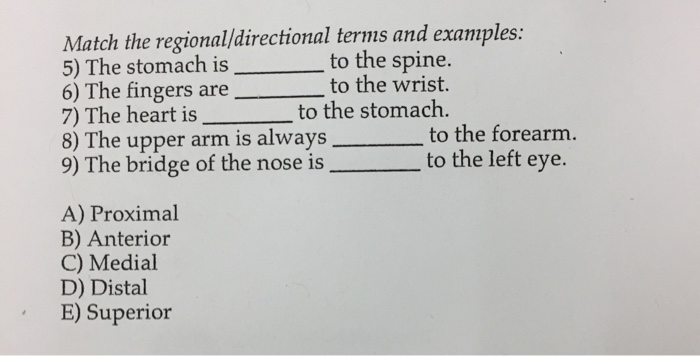 Solved Match The Regionaldirectional Terms And Examples