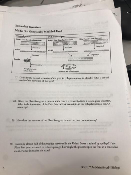 Solved: Plant Hormones How Do Plant Hormones Plant Gowth A ...
