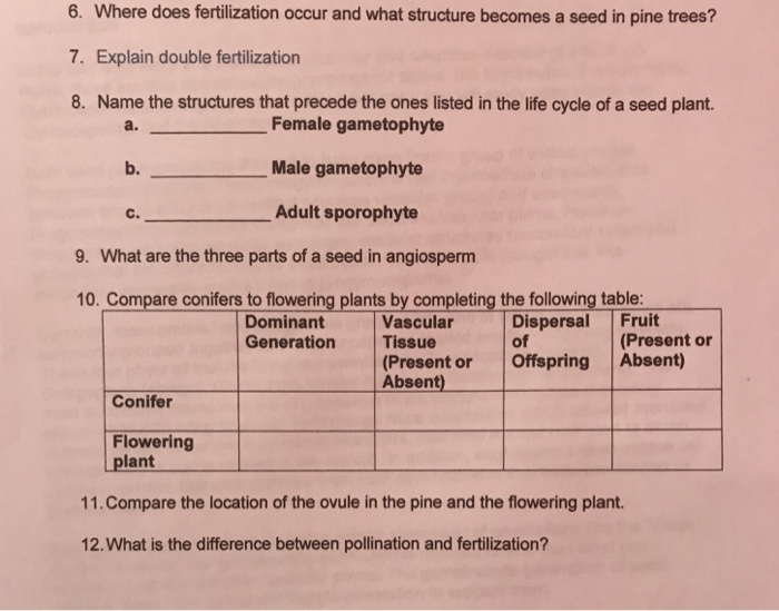 Solved 6 Where Does Fertilization Occur And What Structu