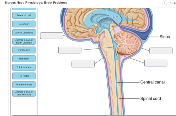 Solved: Nurses Need Physiology: Brain Problems K19 Of 26 S ...