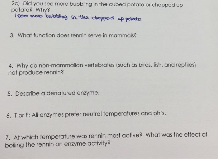 rennin enzyme function