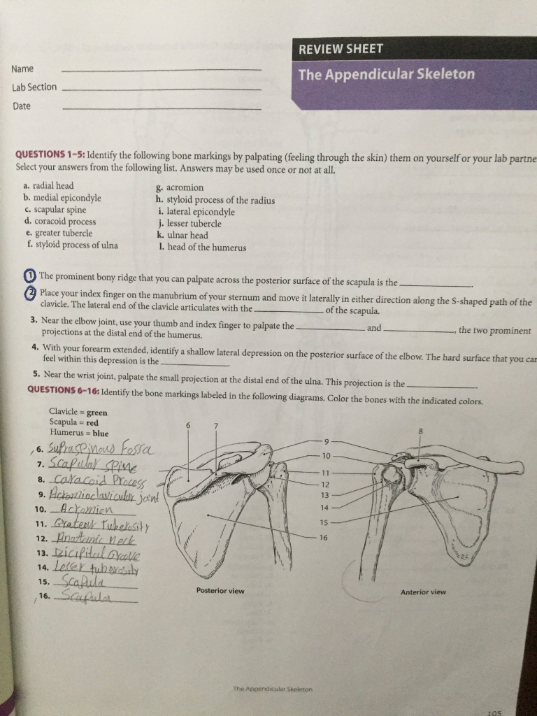 Solved: REVIEW SHEET Name Lab Section Date The Appendicula ...