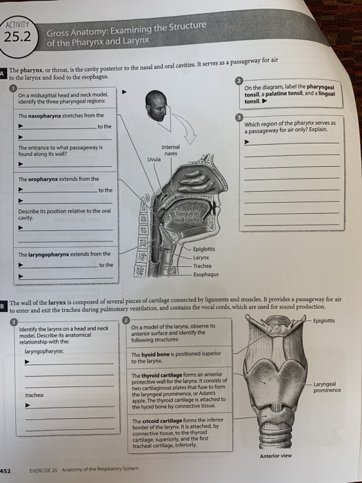 Head Muscles Diagram Parapharyngeal Space Wikipedia Manual Guide
