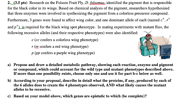2 35 Pts Research On The Folsom Fruit Fly Dfolsomus Identified