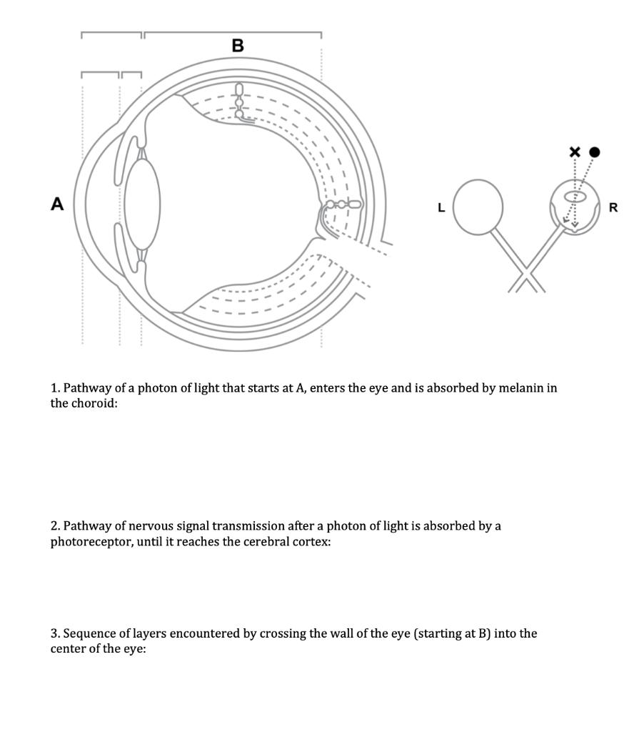 Diagram Of The Eye Worksheet - Aflam-Neeeak