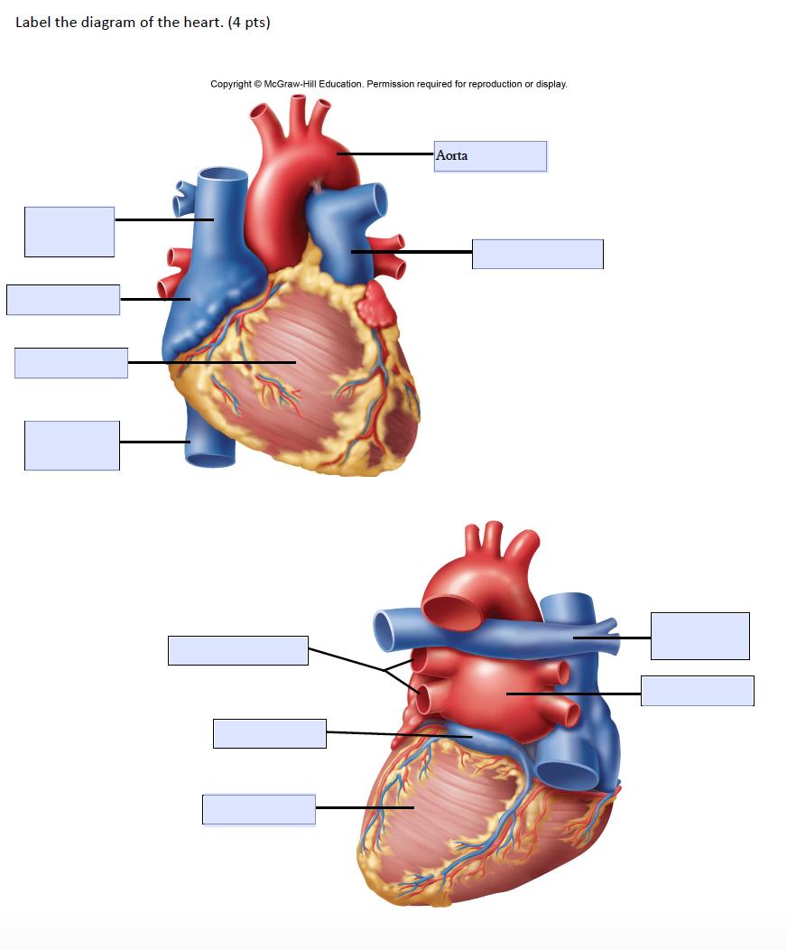 34 Heart Diagram To Label - Labels Design Ideas 2020