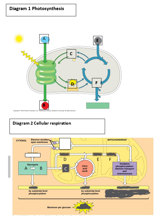 enzymatic diagram of glycolysis solved 1  for diagram 1  in which enzymatic pathway do el  enzymatic pathway