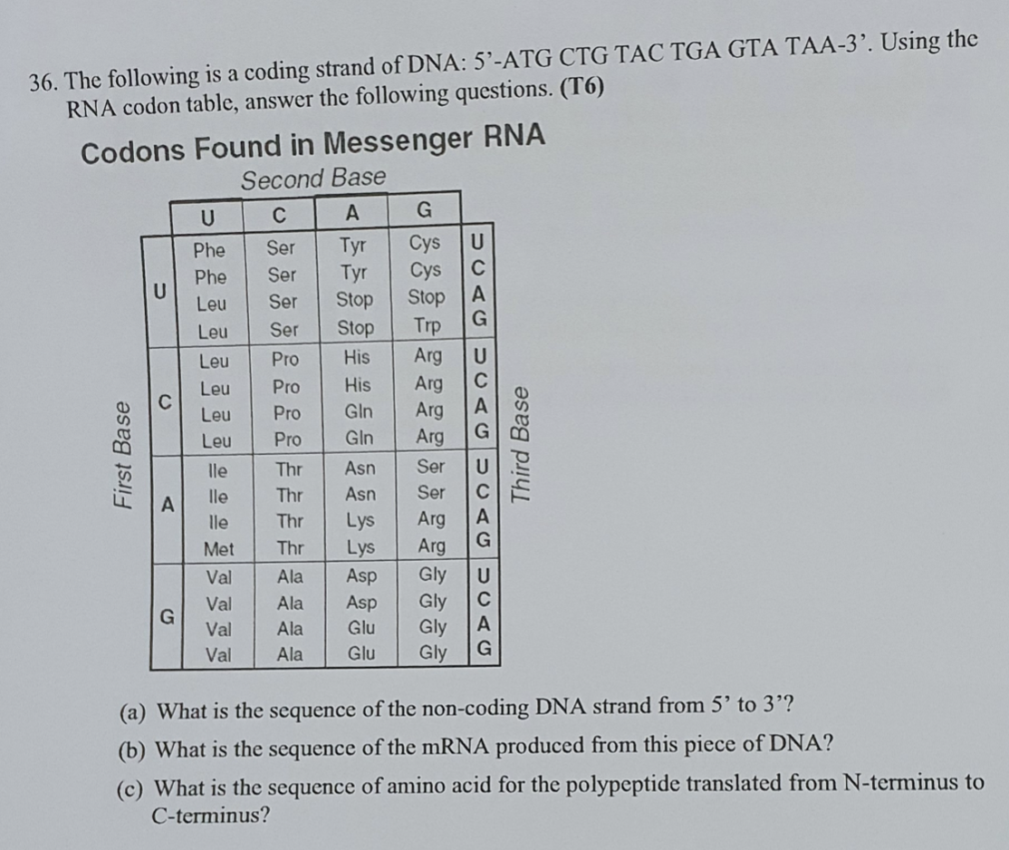 Solved Stop 36 The Following Is A Coding Strand Of Dna Chegg Com