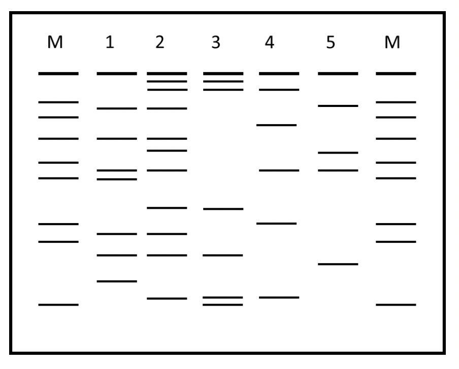 Dna Fingerprinting Worksheet Answers : Dna Fingerprint ...