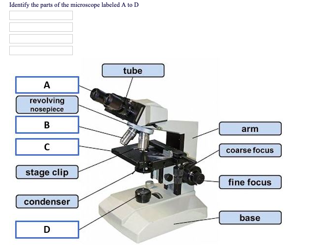 Solved Identify The Parts Of The Microscope Labeled A To