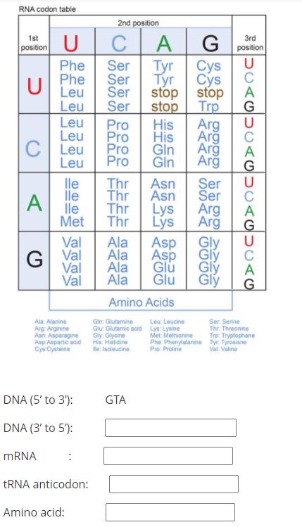 Solved U S Rna Codon Table 2nd Position 1st 3rd Chegg Com