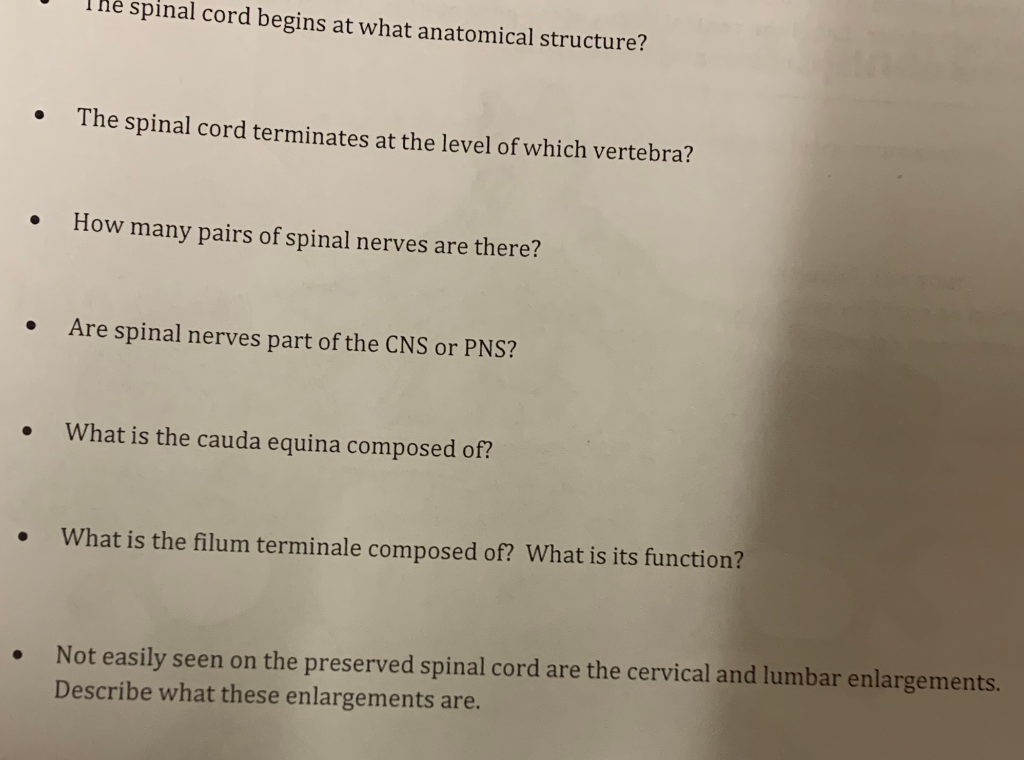 Solved The Spinal Cord Begins At What Anatomical Structur Chegg Com These secondary ossification centers fuse the ossiculum terminale (5) at the tip of the dens appears between 3 and 10 years of age and fuses. solved the spinal cord begins at what