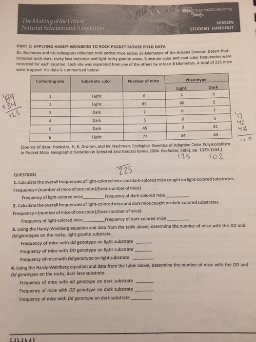 Hardy Weinberg Worksheet Answers Good Worksheet Ideas