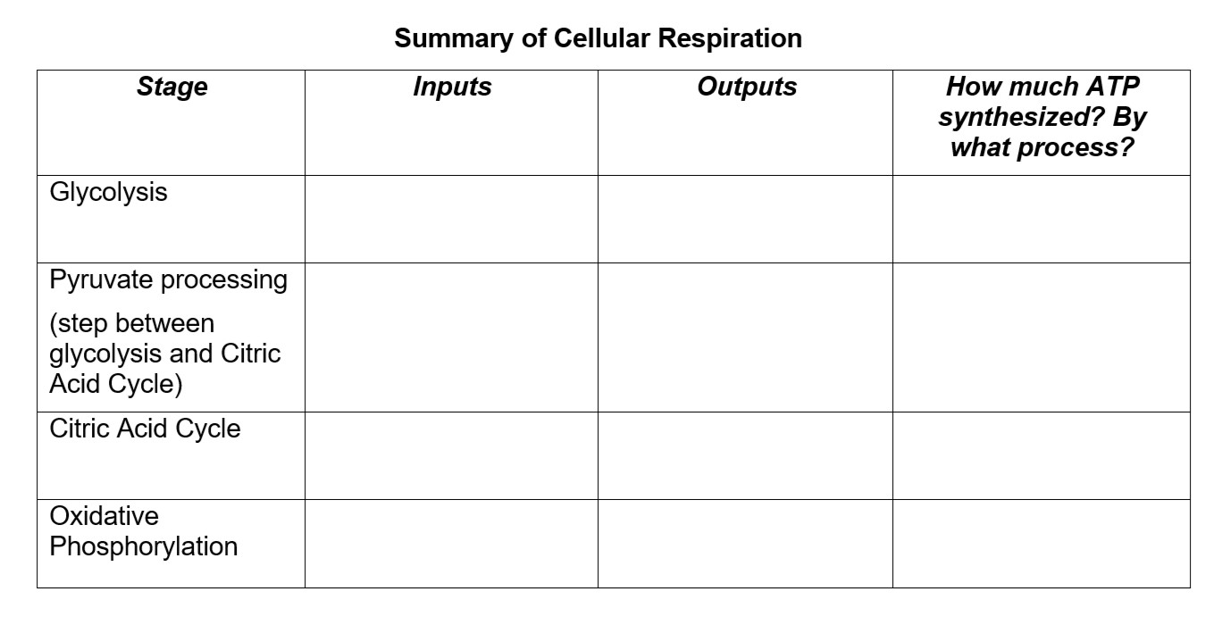 Solved Summary Of Cellular Respiration Inputs Outputs Sta Chegg Com