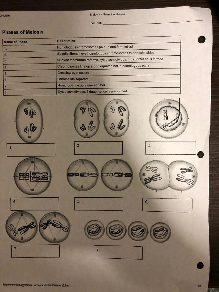Solved Mitosis Meiosis Summary Instructions When Your Mi Chegg Com