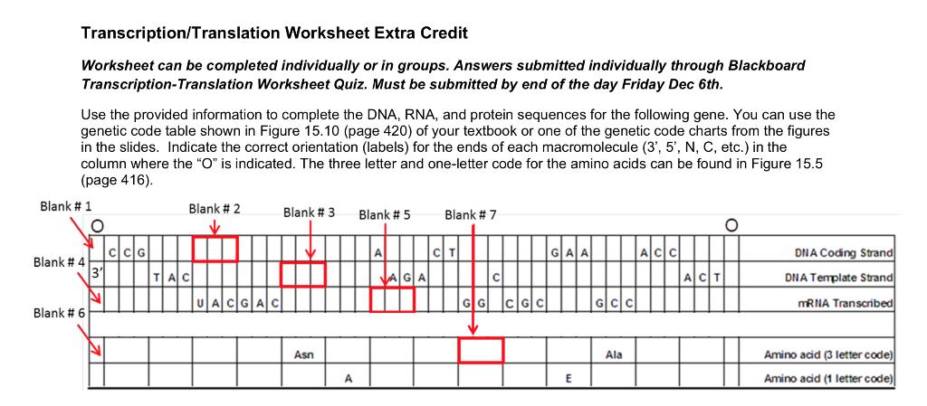Solved: Transcription/Translation Worksheet Extra Credit W ...