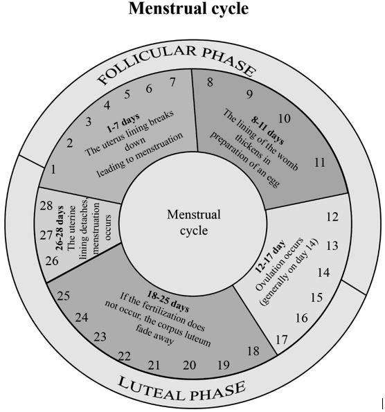 Definition of Menstrual Cycle | Chegg.com