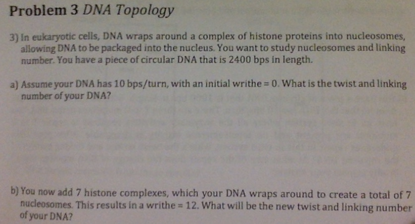 Problem 3 DNA Topology 3) In eukaryotic cells, DNA wraps around a complex of histone proteins into nucleosomes, allowing DNA