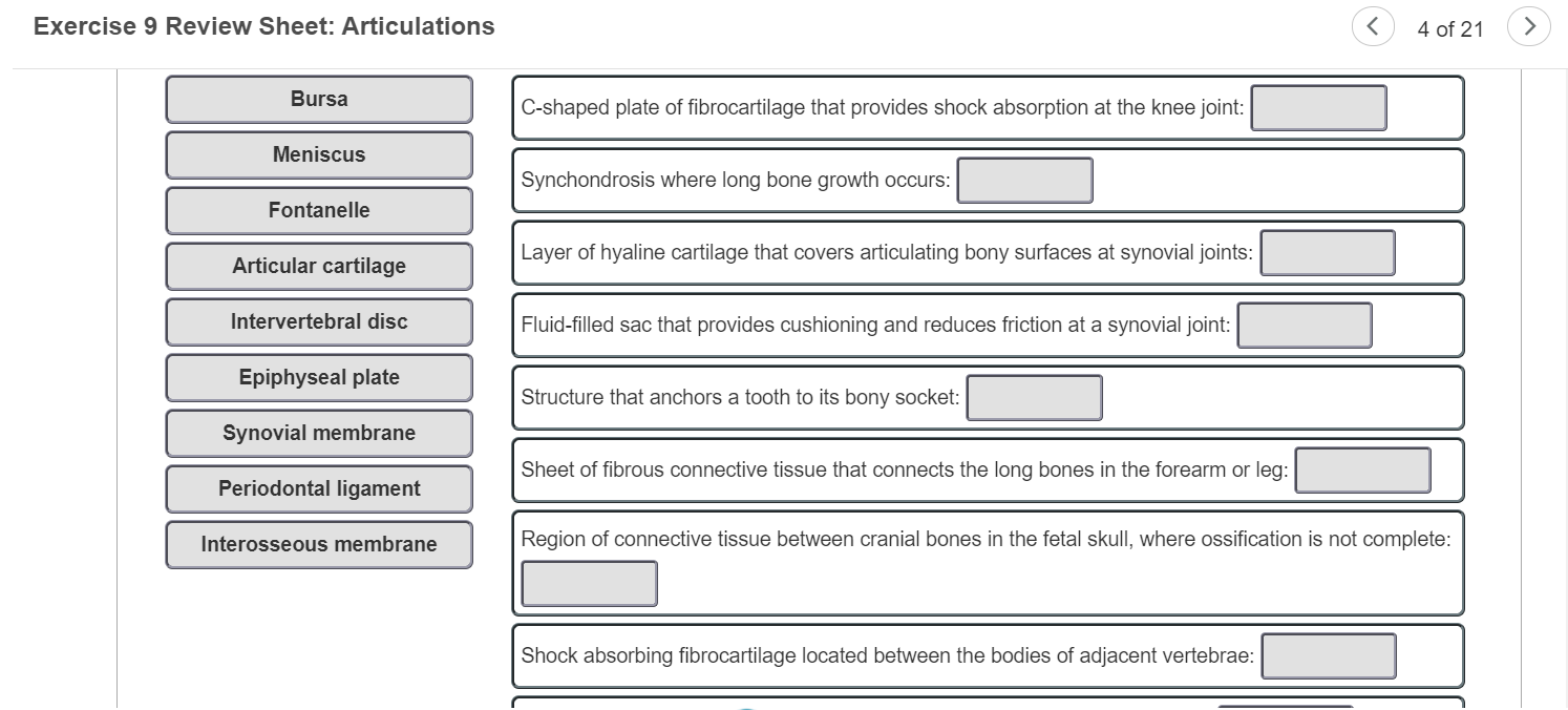 Solved Exercise 9 Review Sheet Articulations 4 Of 21 B Chegg Com Symphysial joints are where the bones are united by a layer of fibrocartilage. solved exercise 9 review sheet