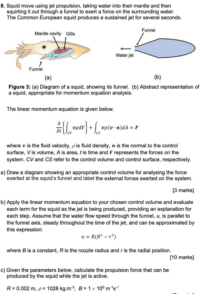 8 Squid Move Using Jet Propulsion Taking Water I Chegg Com