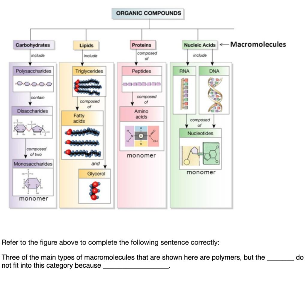 Solved Organic Compounds Carbohydrates Lipids Nucleic Aci Chegg Com