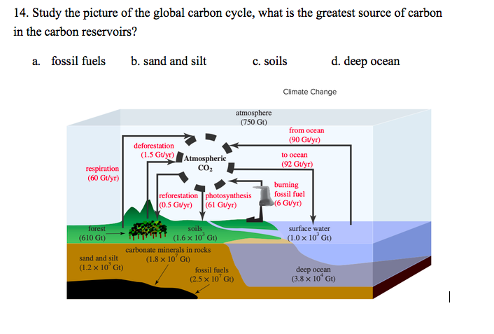 Fuels carbon cycle fossil Can we