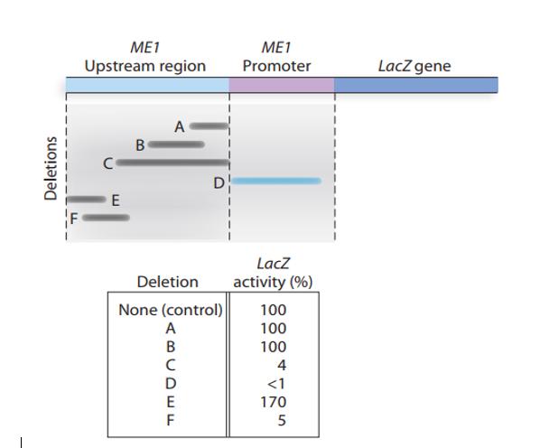 ME1 ME1 LacZgene Upstream region Promoter A DI E LacZ activity (%) Deletion None (control) 100 A 100 B 100 c D <1 E 170 5 Del