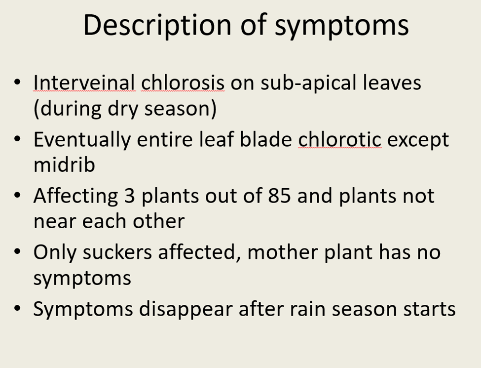 Description of symptoms • Interveinal chlorosis on sub-apical leaves (during dry season) • Eventually entire leaf blade chlor