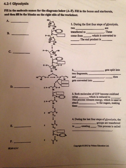 Solved 4 2 1 Glycolysis Fill In The Molecule Names For Th