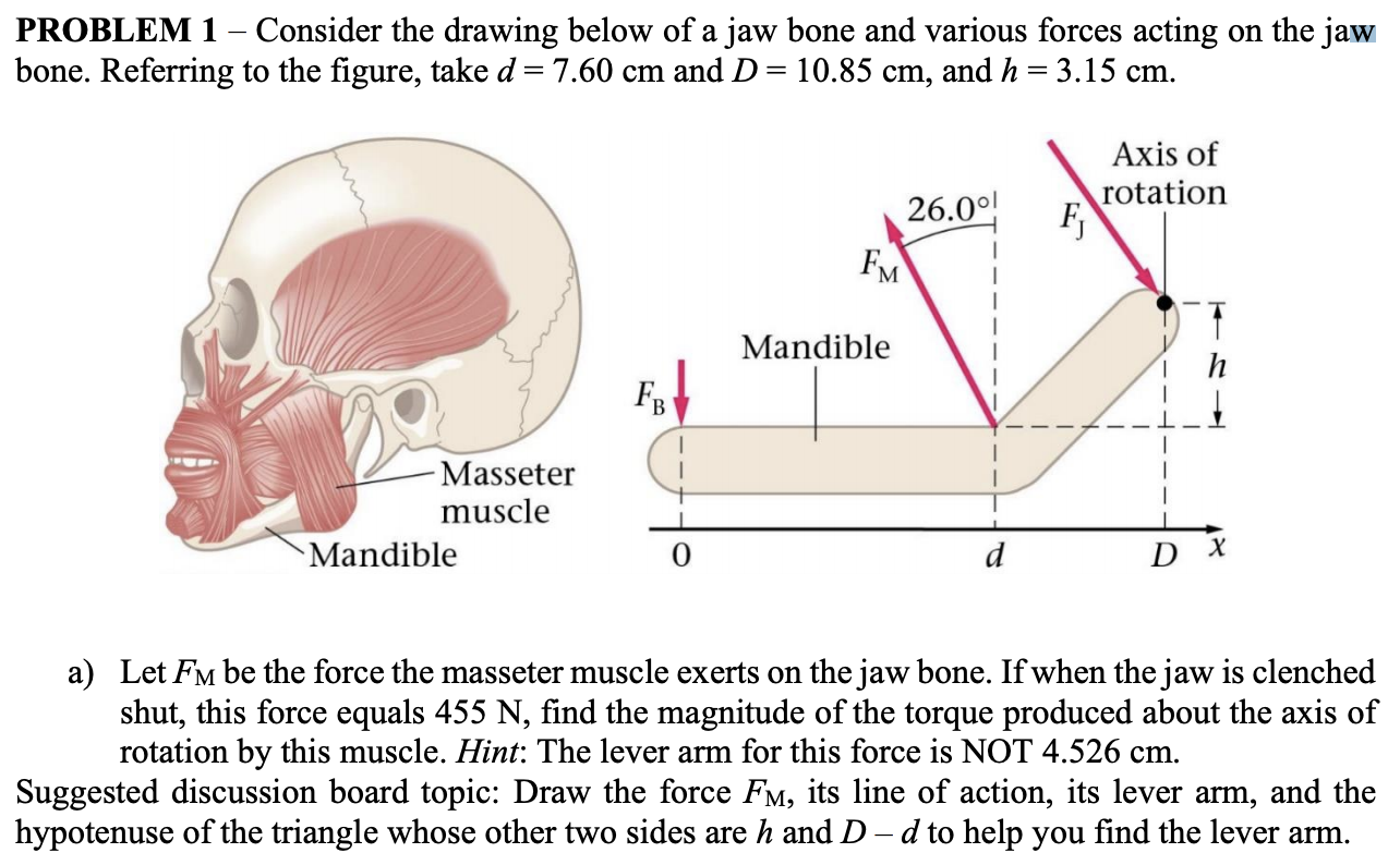 under chin muscle diagram solved problem 1 consider the drawing below of a jaw bo  consider the drawing below of a jaw bo