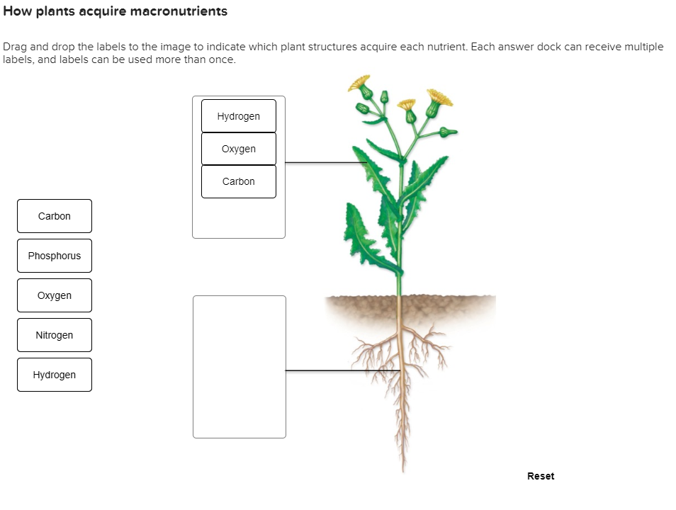 Solved How Plants Acquire Macronutrients Drag And Drop Th Chegg Com