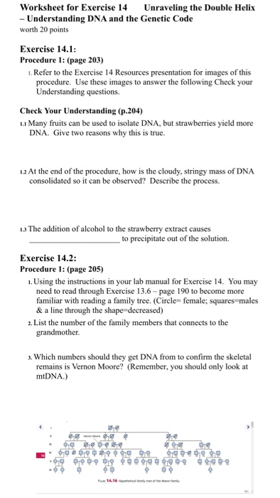 Solved Worksheet For Exercise 14 Unraveling The Double He Chegg Com