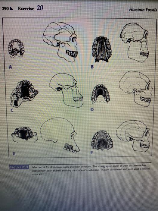 Fenical Broche en Alliage Broche en Forme de Scorpion en Alliage d/écor dhalloween